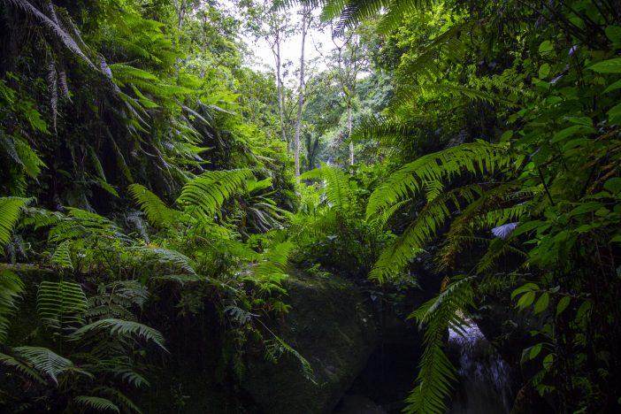 Rainforest Mt. Meru