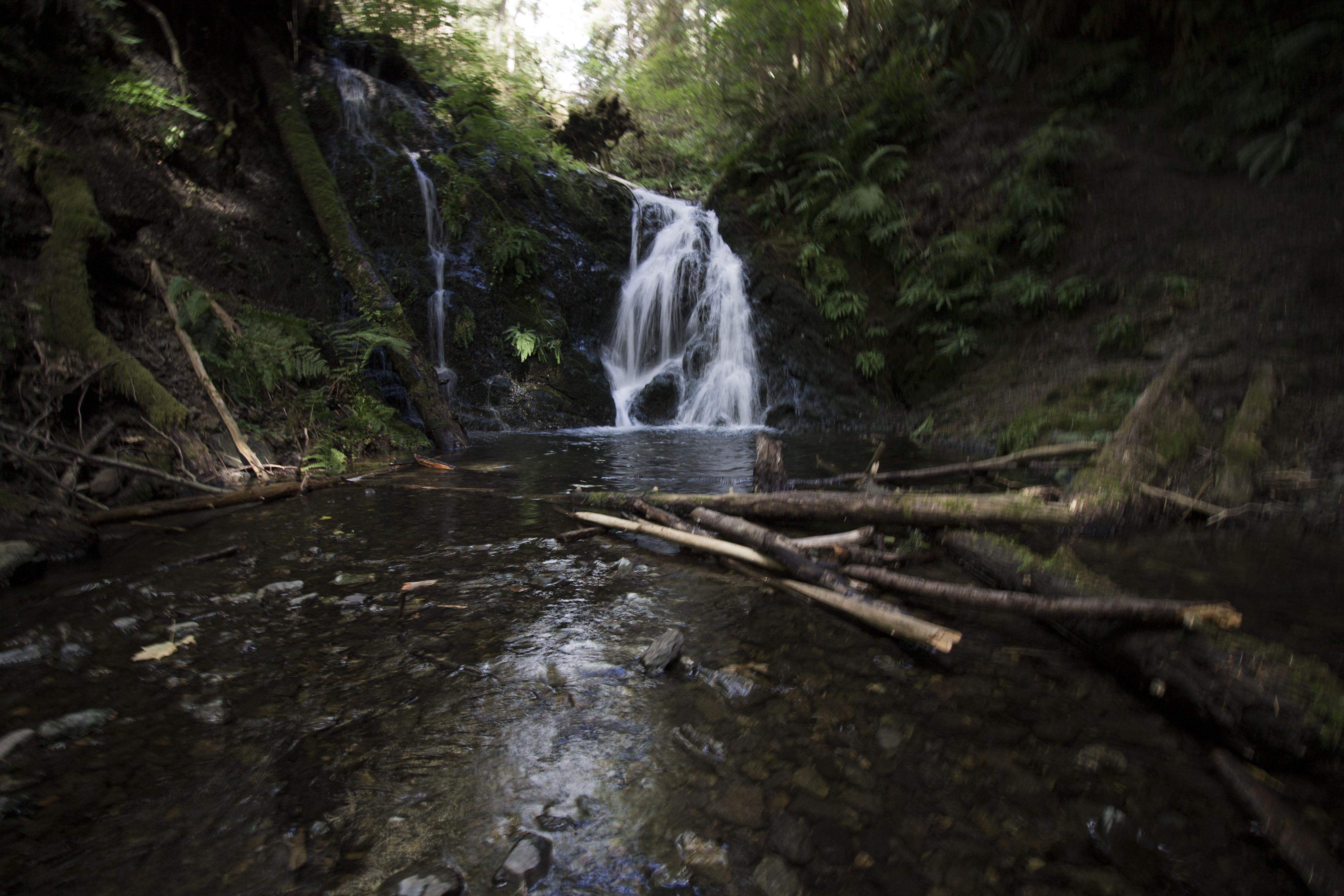 orcas12-hidden-falls