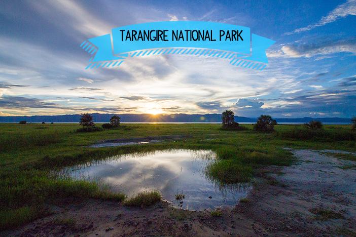 East Africa Safari: Tarangire National Park
