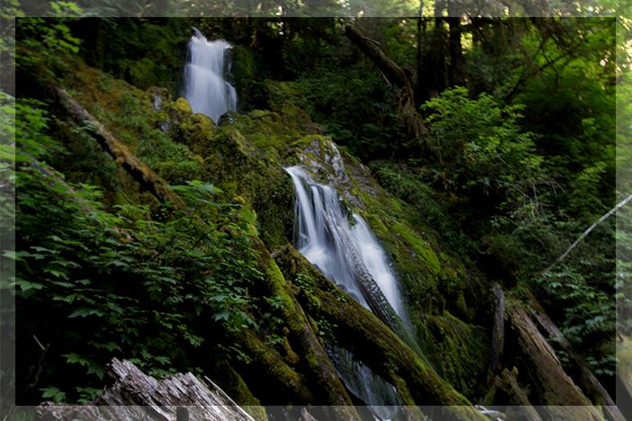 Olympic National Park's Hoh Rainforest