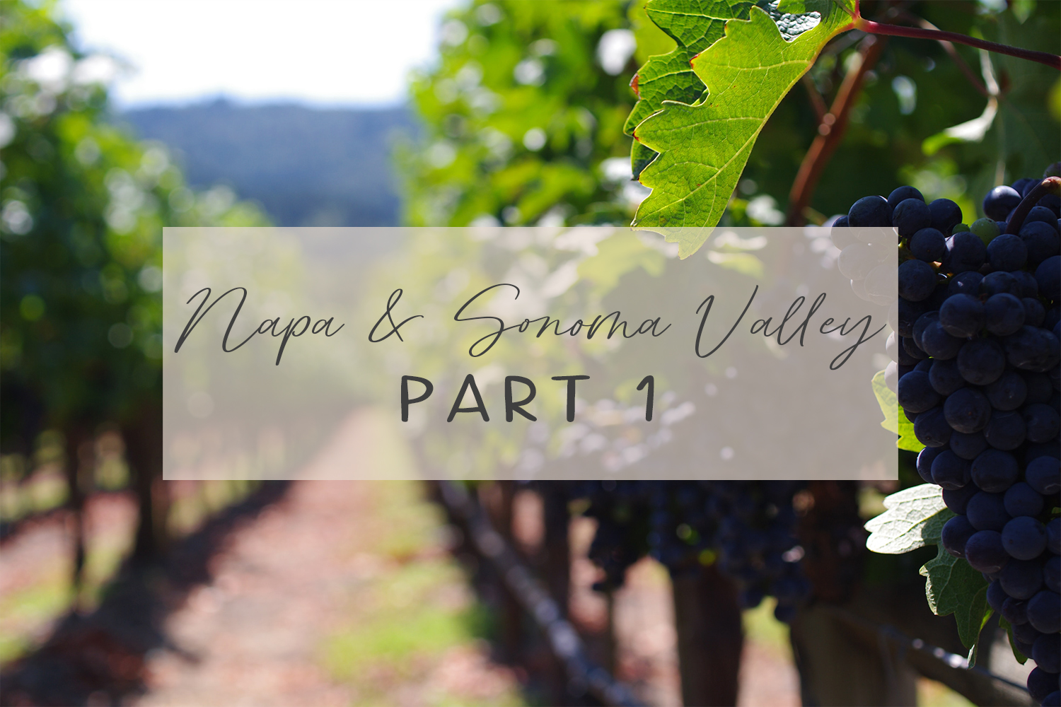 Serendipity and a Quick Trip to Northern California