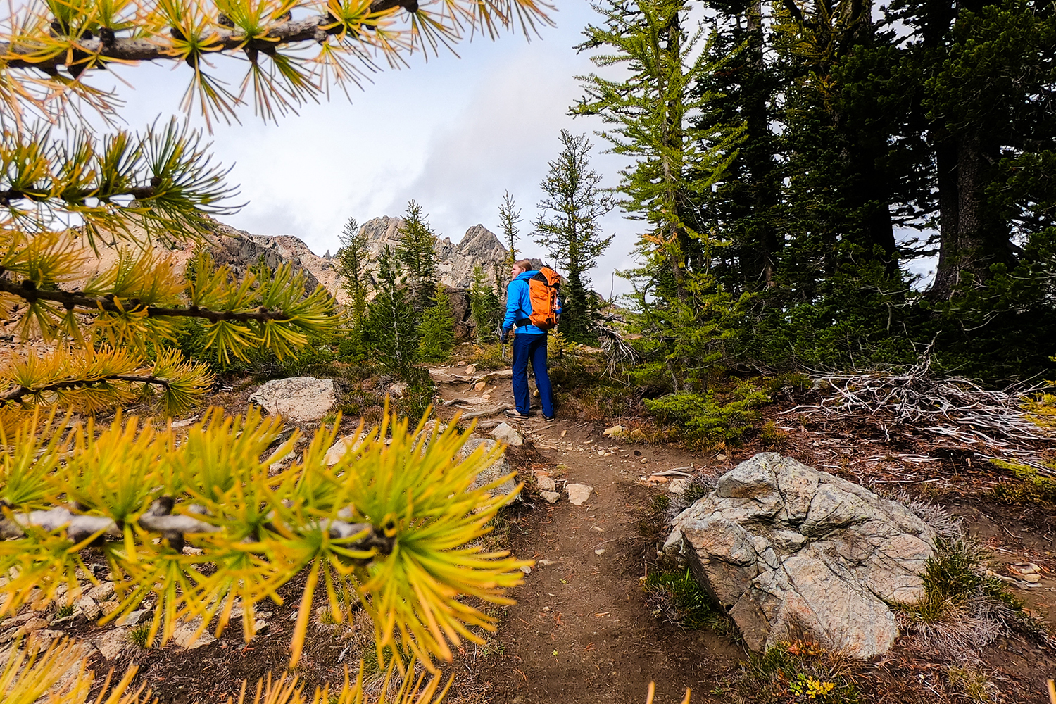 5 Ways to Join the PNW Larch March in Autumn